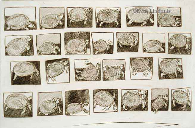 Evan Lindquist artist-printmaker, Document: Sketchbook Page/Turtles, copperplate engraving, fauna