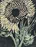 Evan Lindquist artist-printmaker, Sunflower IV 1982, color woodcut relief print, flora