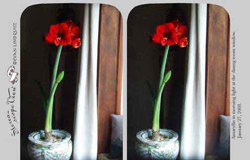 Evan Lindquist artist-printmaker, stereoview card, Amaryllis