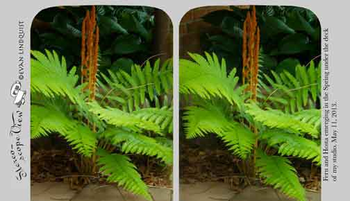 Evan Lindquist artist-printmaker, Stereoview low resolution, Fern