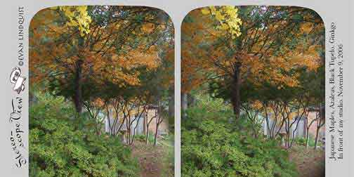 Evan Lindquist artist-printmaker, stereoview card, Maples in front of my studio