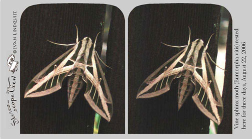 Evan Lindquist artist-printmaker, stereo view, Sphinx Moth photo