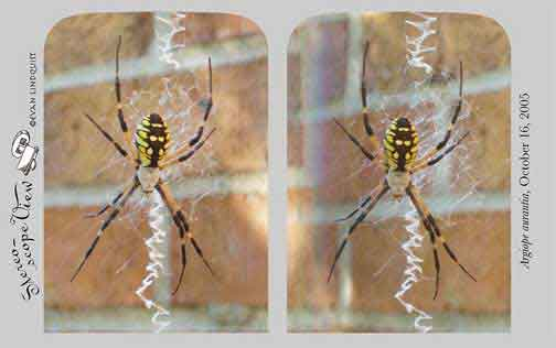 Evan Lindquist artist-printmaker, stereoview card, Spider
